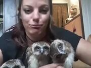 Three Owls And A Weird Lady