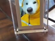Happy Doggo Got Its Own Video Frame