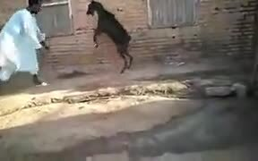 How To Fight Goats Properly