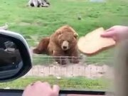 Bear With A Great Catch