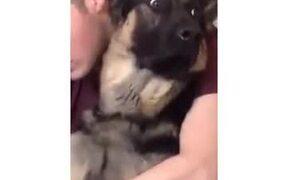German Shepherd's Dramatic Expression