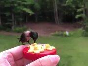 A Beautiful Hummingbird Feeder