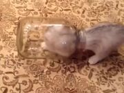 Kitten Vs Glass Jar
