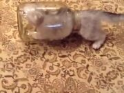 Kitten Vs Glass Jar
