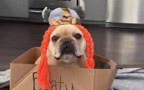 A Viking Dog On A Voyage