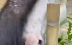 Friendship Between A Chimp And A Horse