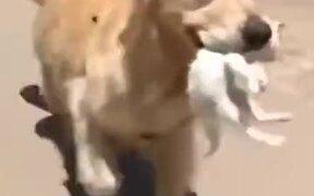Kind Dog Rescued A Kitten