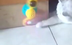 An Innovative Toy For A Cat
