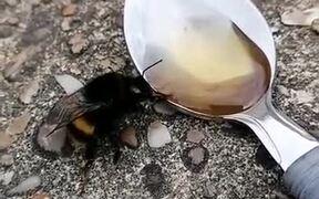 Feeding Honey To A Bee