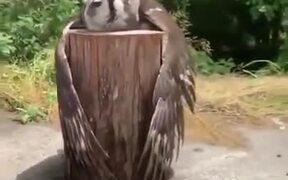 Owl On A Log