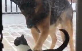 When A Dog And Cat Are Friends