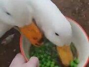 Two Ducks Vs A Bowl Of Peas