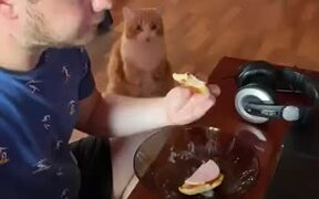 Cat Staring At Your Food