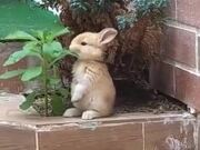 Cutest Rabbit Ever!