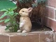 Cutest Rabbit Ever!
