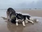 Huskies On The Beach
