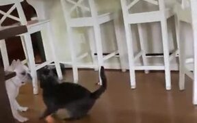 When A Cat And A Dog Wrestle