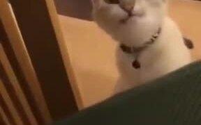 A Friendly Talkative Cat