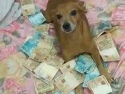 Dog Strictly Guarding Money