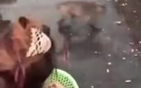Funny Monkey Business