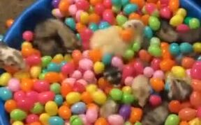 Ever Wanted A Ferret Cereal?
