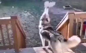 Smoke Emitting From Husky's Mouth
