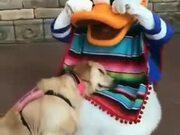 When A Dog Meets Donald Duck