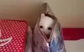 Cute White Kitten Inside A Bag