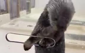 Sea Otters Are Nature's Magician