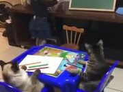 Little Girl Homeschooling Cats