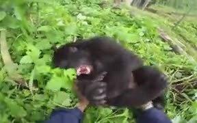Do Gorillas Feel Ticklish?