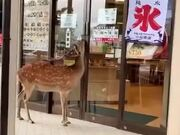 When The Customer Is Literally A 'Deer'