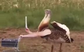 What If Birds Had Hands Like Humans?