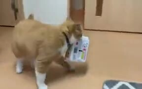 Cat Burglar Stealing Noodles