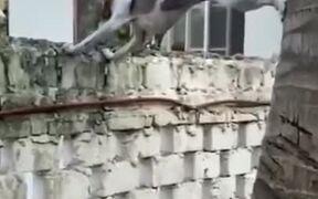 A Real-Life Spy Dog