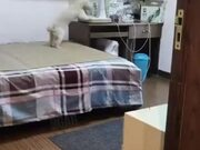 Dog Setting Up Room For A Sleep