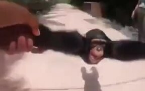 A Chimp Who Wants Human Love