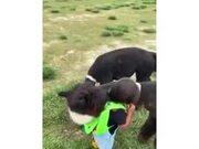 Alpaca Hugs A Little Kid