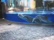 Trapped Dolphins Are Observing Squirrels