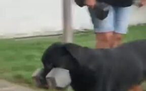 A Dog Who Can Carry 30kg Dumbbell