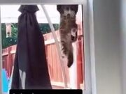 Cat Burglar Trying To Sneak In