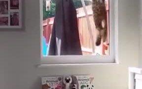 Cat Burglar Trying To Sneak In