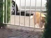 When A Fat Cat Gets Stuck