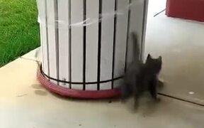 Foolish Cat Running Round And Round
