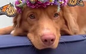 Dog Wearing A Tiara With Real Butterflies