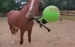 A Horse Taught To Use A Weapon