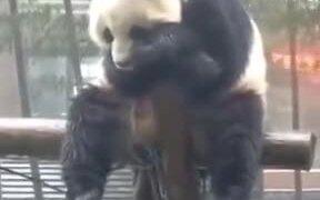 Pandas Are Boring