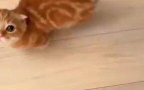 Cutest Kitten Seeking Attention
