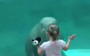 Walrus Vs Little Girl