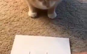 Kitty Playing Tic Tac Toe